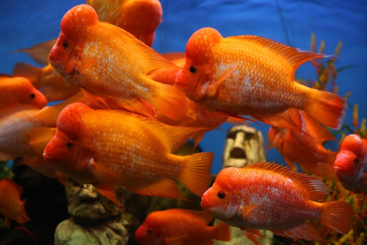 Aquarium fishes about us