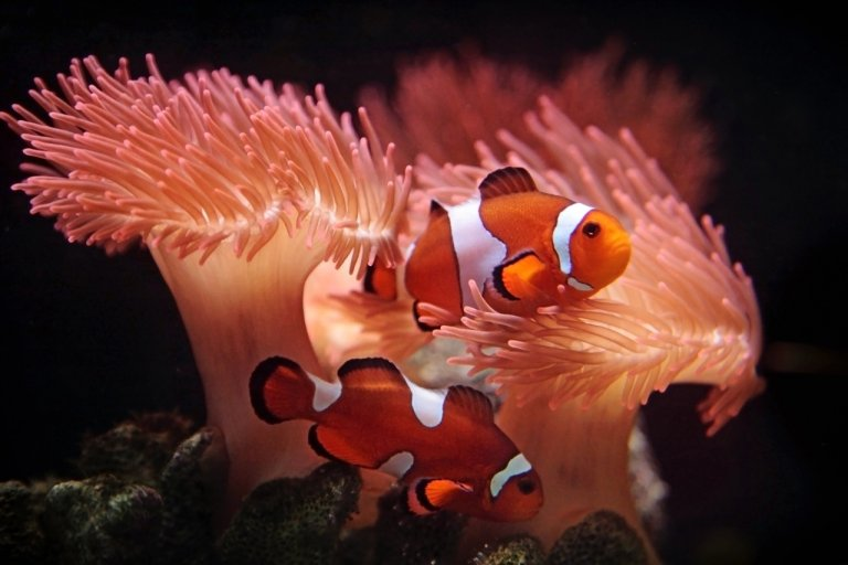 Clownfish care guide