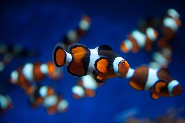 Clownfish tank aquarium