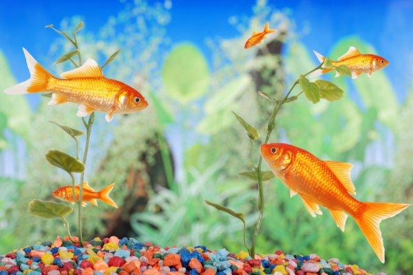 The best fish puns
